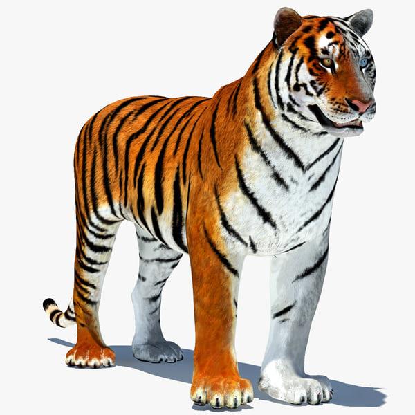 3d model tiger color rigging animation