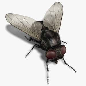 housefly rigged 3d model