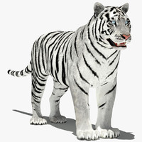 amur tiger white 3d 3ds