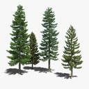 pine tree 3D models