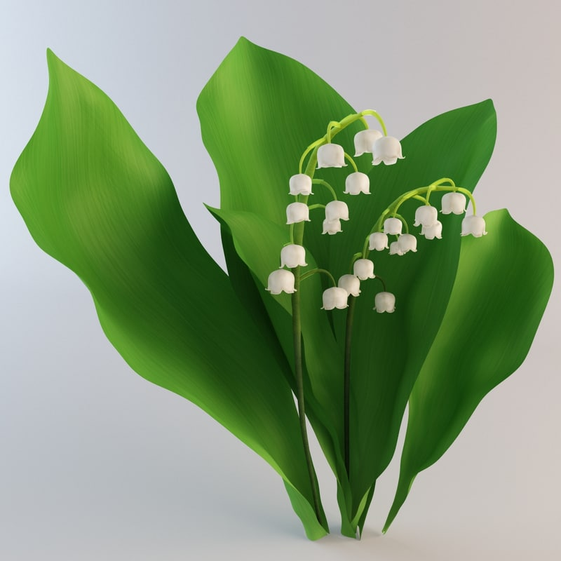 lily valley plant flower 3d 3ds