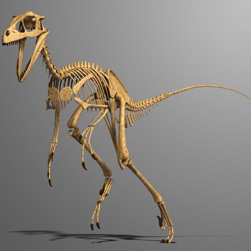 3d model dino skeleton dromaeosaurus