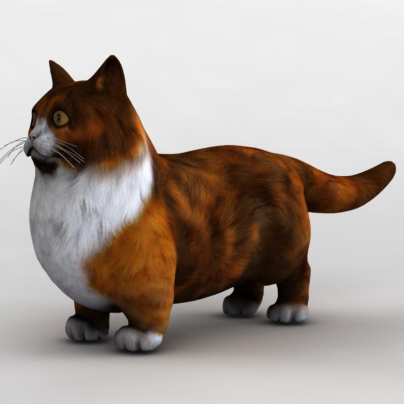 munchkin cat animal 3d model