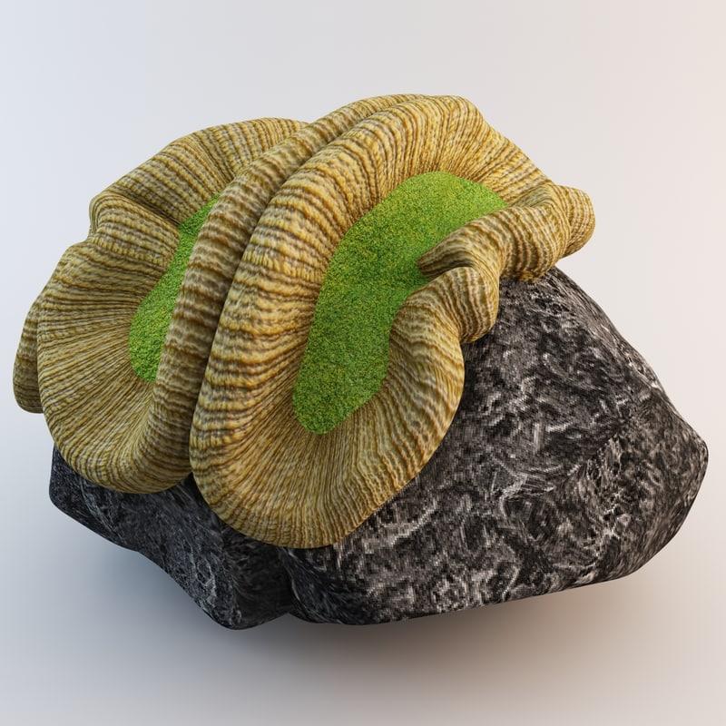 3d brain coral model