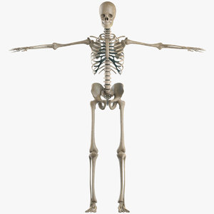 realist human skeleton skeletal skull obj
