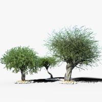 max olea tree realistic