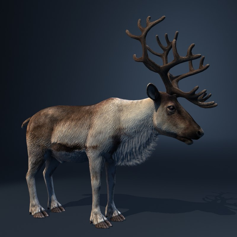 max reindeer animation christmas