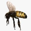 invertebrate 3D models