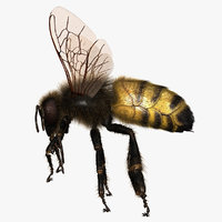 Honeybee (ANIMATED) (FUR)