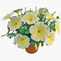 petunia flower 3d 3ds