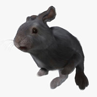 3d rabbit grey fur animation
