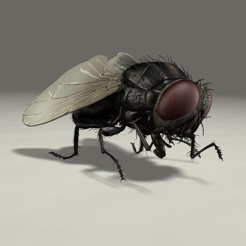 housefly animation ma