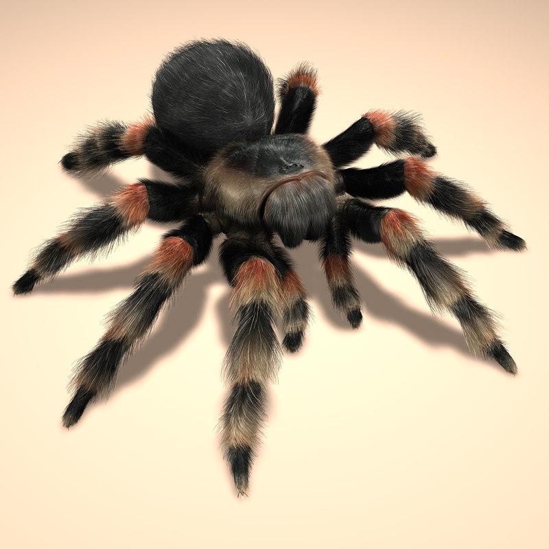 mexican redknee tarantula hair fur 3d obj