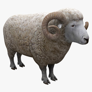 wether sheep 3d max