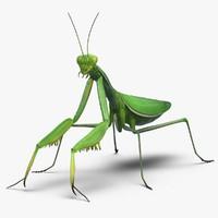 3d mantis religiosa 2