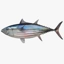 tuna 3D models