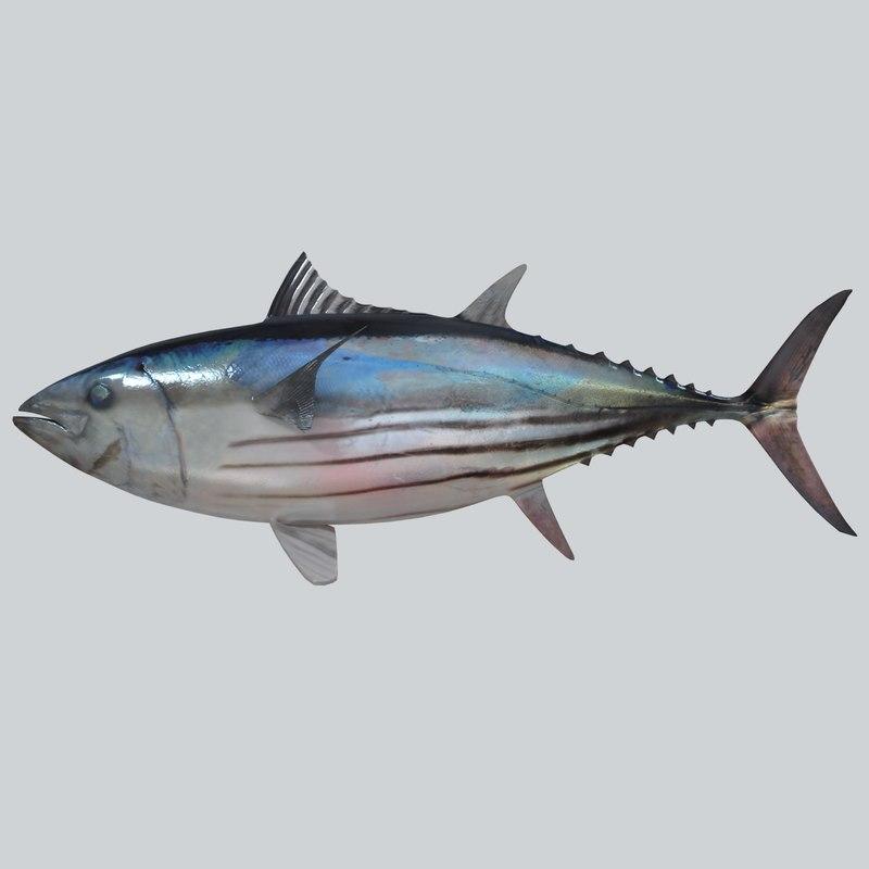 skipjack tuna 3d max