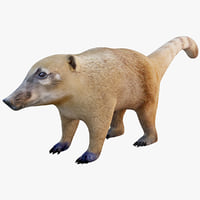 3ds max nasua raccoon modelled