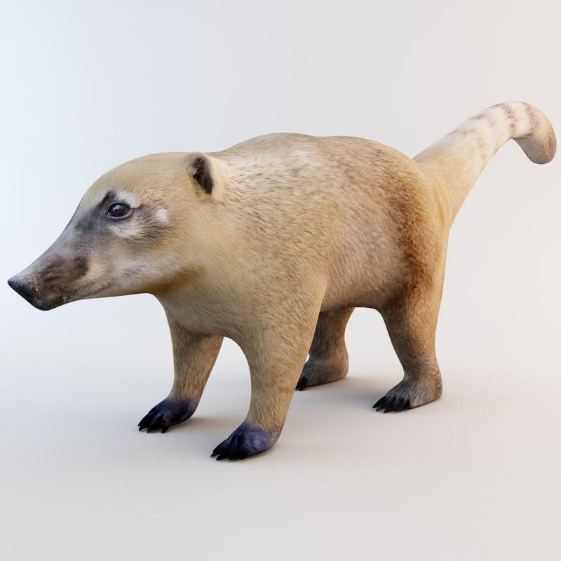 3ds max nasua raccoon modelled