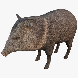 collared peccary 3d max