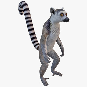 ring tailed lemur 3ds
