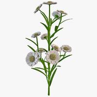 lwo flower achillea millefolium