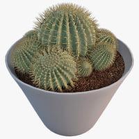 Cactus Epiphyllum Sp 2