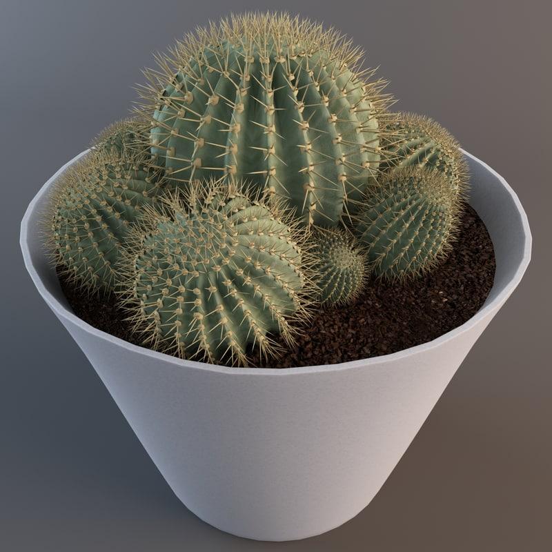 max epiphyllum cactus plant 2