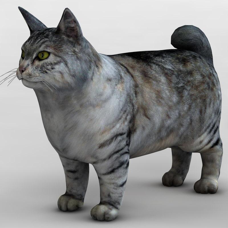 kurilian bobtail cat 3d max