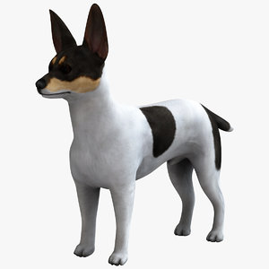 american toy fox terrier 3d max