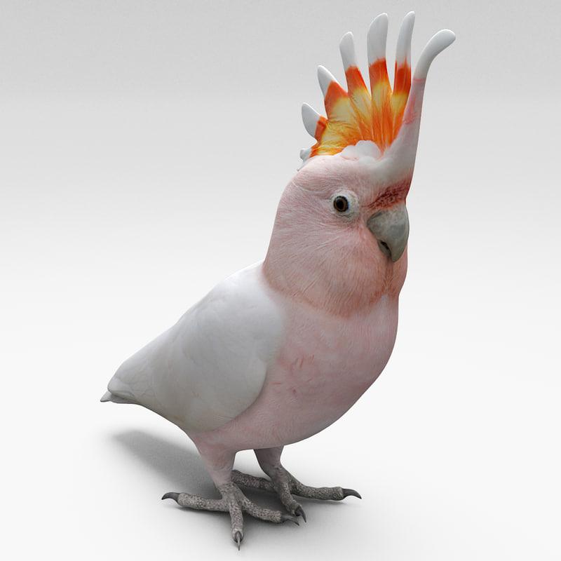 major mitchell cockatoo bird 3d 3ds