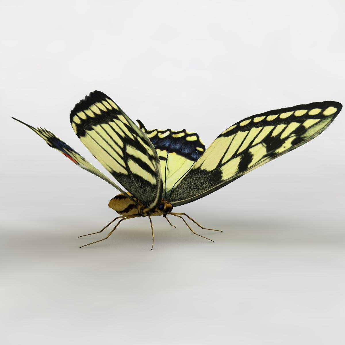tiger swallowtail butterfly 3d model