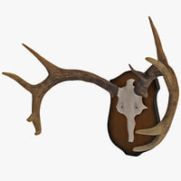 3d model mounted antlers