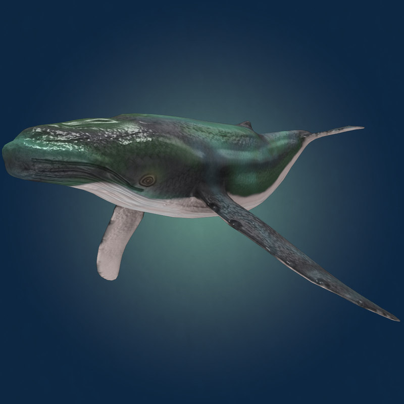 3d max whale animation
