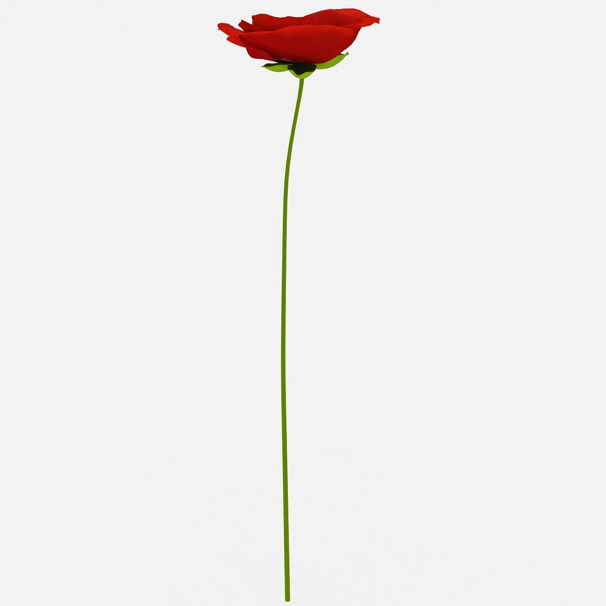 3d red poppy flower