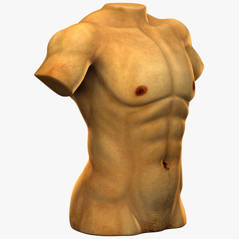white male muscular torso max