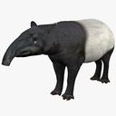 Tapir 3D models