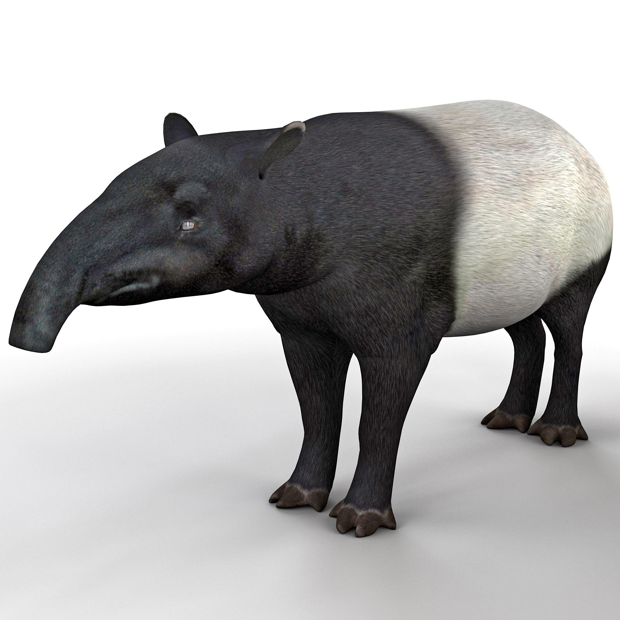 3d tapir animal modelled