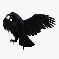 corvus corax common raven 3d model