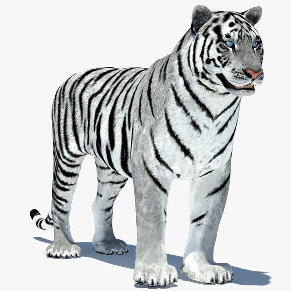 max tiger amur white animation