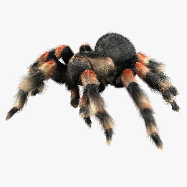 maya mexican tarantula fur