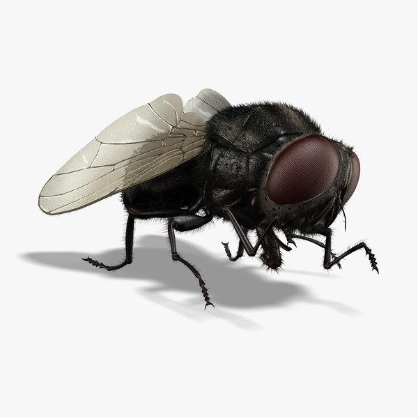 maya housefly animation