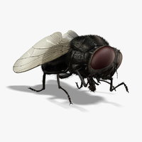 Housefly (ANIMATED) (FUR)
