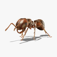 3d ant animation model