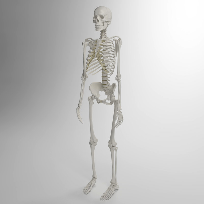 3d accurate human skeleton model