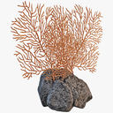 Sea Fan Coral 3D models