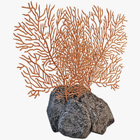 sea fan coral 3ds