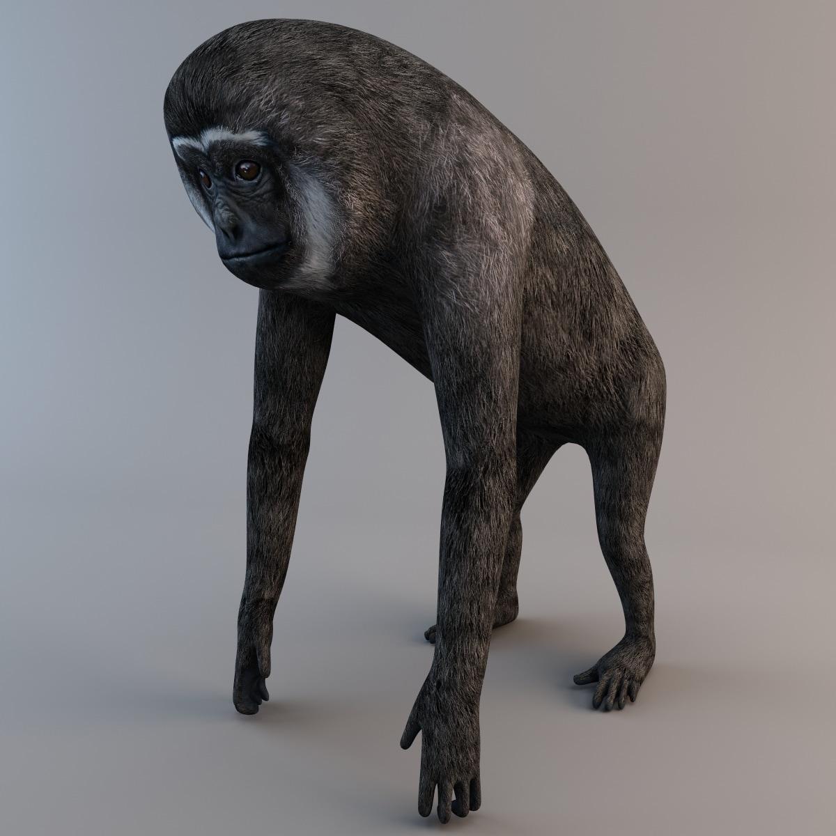 max agile gibbon