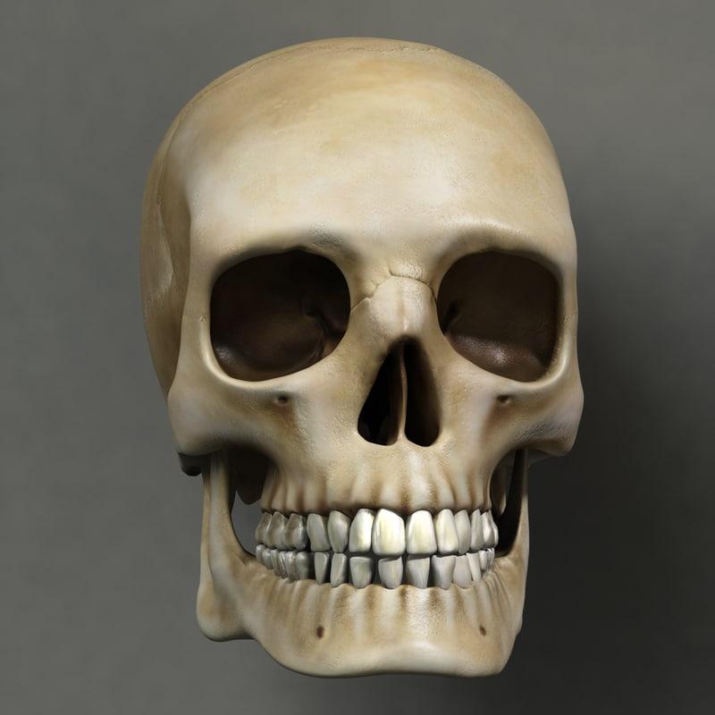 skull human obj