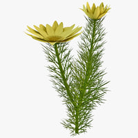 3ds adonis flower